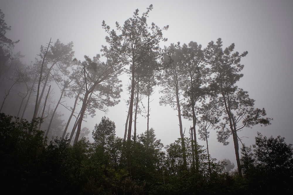 Foggy forest in Madeira, March 2009.