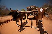 Varzea da Palma_MG, Brasil...Trabalhadores em carro de boi em Varzea da Palma, Minas Gerais...Workers on oxcart in Varzea da Palma, Minas Gerais...Foto: LEO DRUMOND / NITRO