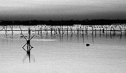 Vista dal mercato del pesce di Taranto. Si notano i pali adoperate per la coltivazione delle cozze che sta attraversando un periodo critico per la dichiarata presenza di diossine nei mitili.