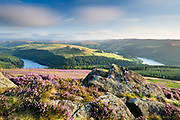 Blossoming heather and gritstone rocks on the summit of Win Hill provide the foreground for this stunning view towards Crook Hill and Ladybower Reservoir in the Peak District's Upper Derwent Valley. Derwent Moors can be seen to the right and Woodlands Valley to the left of the image. Summer in Derbyshire, England, UK. August, 2014.