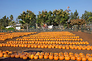 Pumpkin Patch at Orange County Great Park