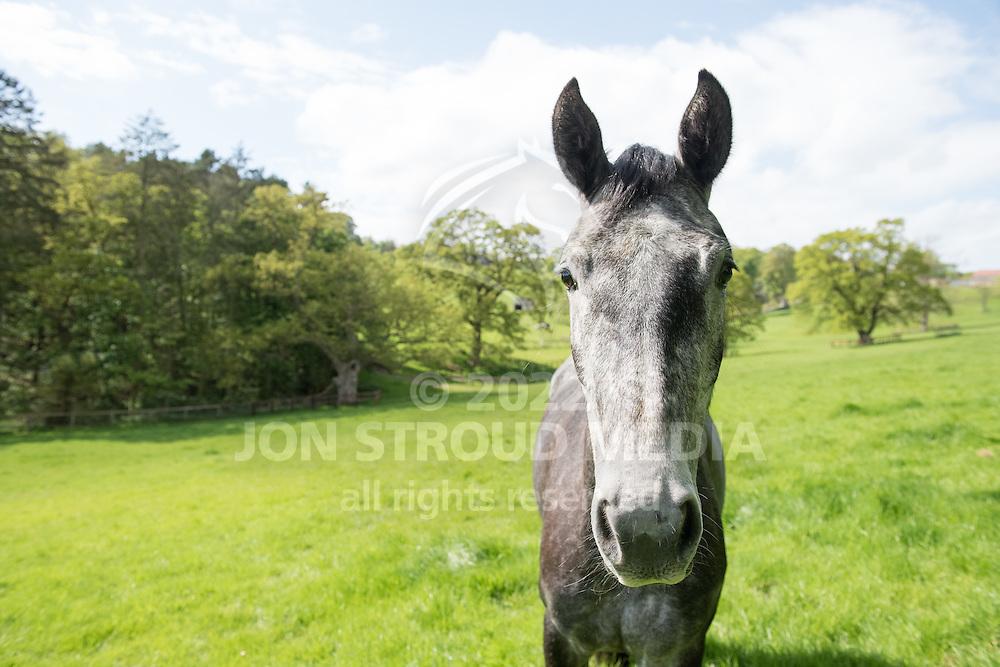 - Mount St John - Felixkirk, Thirsk, North Yorkshire, Unied Kingdom - 14 May 2016