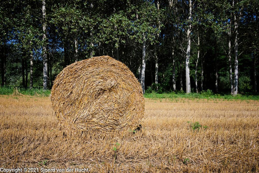 Charmes sur l'Herbasse Drôme, Frankrijk - augustus 2021: Een veld met opgerolde balen hooi.   Charmes sur l'Herbasse Drôme, France - August 2021: A field with rolled bales of hay.