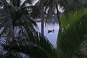 © Licensed to London News Pictures. 02/01/2012. A man and woman, seen through palm fonds, on a boat on the Thu Bon River, Hoi An, Vietnam. Photo credit : Stephen Simpson/LNP