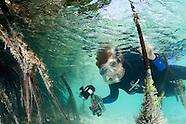 Sylvia Earle & Other Ocean Explorers