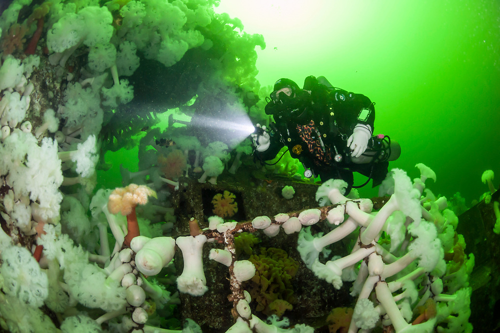 Scuba diver swims past the shipwreck HMS Saskatchewan near Nanaimo, Vancouver Island, British Columbia, Canada