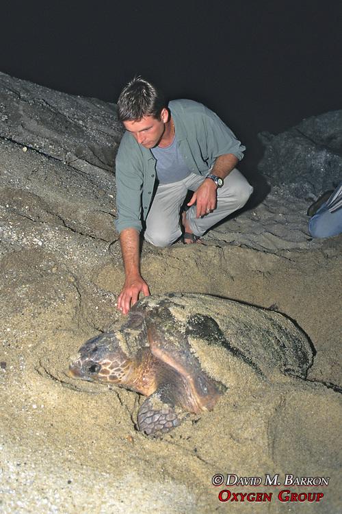 J. Nichols & Nesting Loggerhead Turtle