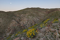 I got an early start climbing Coyote Mountain in Anza Borrego Desert State Park. It was going to be a very hot day, but the temperature was much more pleasant in the morning. The just past full moon set in the west while I climbed a ridge in between 2 canyons.