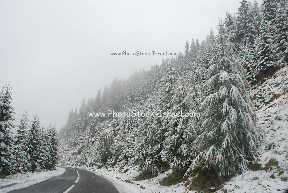 Romania, Snow covered mountain and frozen trees