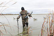 A waterfowler retrieves his spinning-wing decoy during a Manitoba hunt.