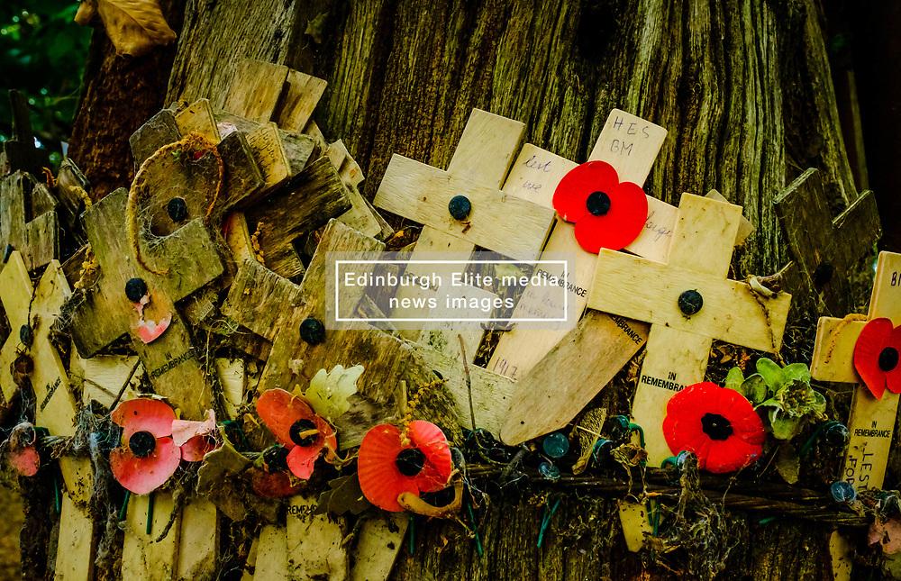 Remembrance crosses attached to a tree in Sanctuary Wood Near Passchendaele, Belgium<br /> <br /> (c) Andrew Wilson | Edinburgh Elite media