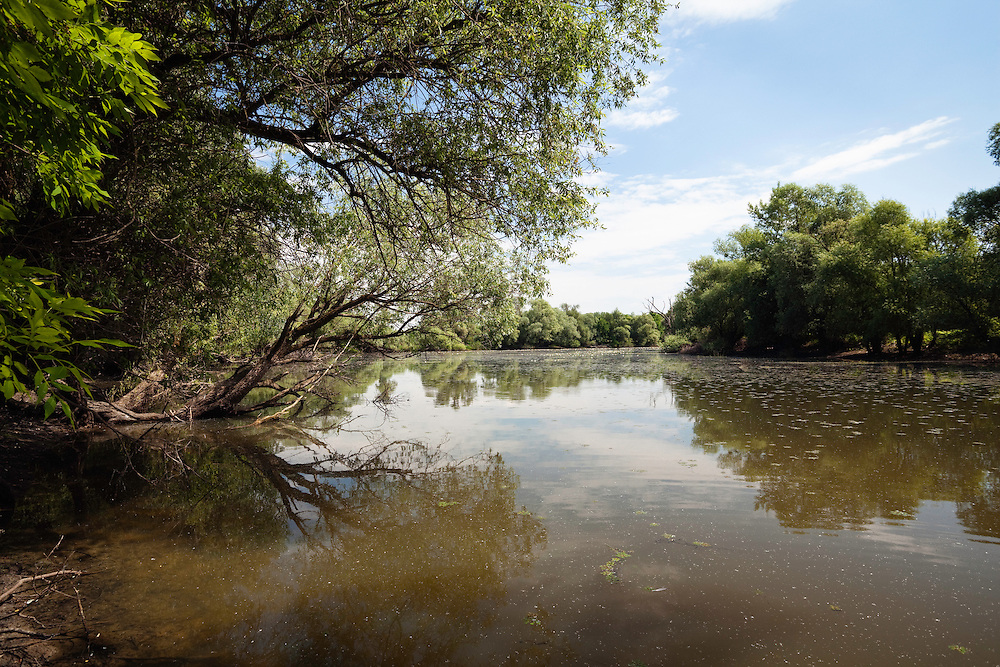 Backwater of Latorica River, Eastern Slovakia, Europe, Latorica Altwasser, Ost-Slowakei, Europa