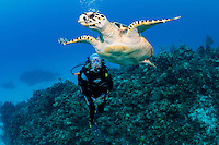 A diver observes a Hawskbill Sea Turtle<br /> <br /> Shot in Cayman Islands
