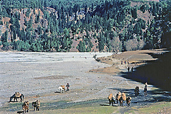 Horses Along Dry Riverbed