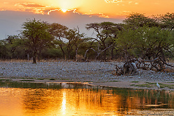 Waterhole at Etosha National Park during sunset, Namibia, Africa