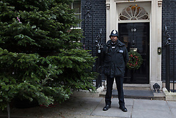 © licensed to London News Pictures. London, UK 30/11/2012. The Downing Street Christmas Tree has been erected outside No 10 on 30/11/12. The tree is a Nordmann Fir grown in Scotland by Mike Craig. Photo credit: Tolga Akmen/LNP