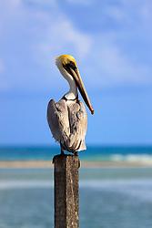 Pelican's Rest