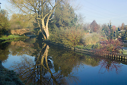 Looking across to John Massey's garden from the bank of the Staffordshire and Worcester canal on a frosty morning in winter