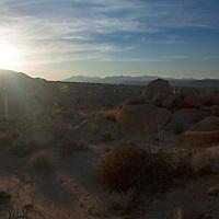 USA, California, Joshua Tree. Desert light of Joshua Tree.
