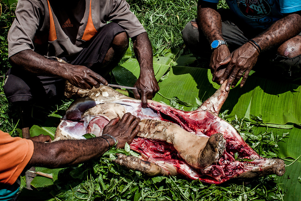 """David's family members examine the pig's internal organs to search for the cause of his illness during the adat ritual. <br /> <br /> One of the most common practices in the highlands to diagnose and cure HIV is by conducting a traditional ritual termed adat.  This involves killing a pig and examining its blood, heart, lungs, and kidney.  After cutting the pig open and inspecting its internal organs, the practitioners of adat remove what they interpret as parasites or cancerous parts that they believe caused the sickness.  Cleaning the pig's flesh by washing it with water would also """"cure"""" the person's illness.  Performing the adat ritual is expensive since a pig can cost hundreds of dollars.  The treatment does not work despite the strong cultural belief behind it.  In the end, after killing numerous pigs and spending a fortune, many people give up hope.  By the time they finally decide to go to the hospital, their condition is too critical with little chance for survival.<br /> <br /> Due to a lack of HIV/AIDS education, limited access to health services, and strong pre-existing cultural beliefs about illness, many Papuans who are desperate for a cure turn to alternative medicines and traditional methods of healing.  Sometimes it involves cutting different parts of the body to drain """"dirty"""" blood believed to cause the sickness.  Fruit potions such as the renowned red fruit potion (buah merah) are also extremely popular for its perceived healing capability.  In some cases, those who are already taking ARV medication abandon it to take expensive alternative medications such as Herbal Life vitamin supplements because they are promised an immediate cure."""