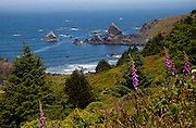 The Oregon coast near Brookings