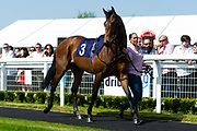 The Cruising Lord  - Ryan Hiscott/JMP - 19/04/2019 - PR - Bath Racecourse- Bath, England - Race 1 - Good Friday Race Meeting at Bath Racecourse
