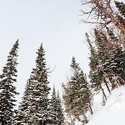 Natalie Segal skis the backcountry off of Jackson Hole Mountain Resort in Teton Village, Wyoming.