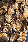 On a street market. Oysters. On Les Quais. Bordeaux city, Aquitaine, Gironde, France