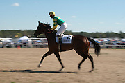 2  April, 2011:  Sunshine Number's and jockey Jody Petty leave the paddock for the Grade III Carolina Cup.
