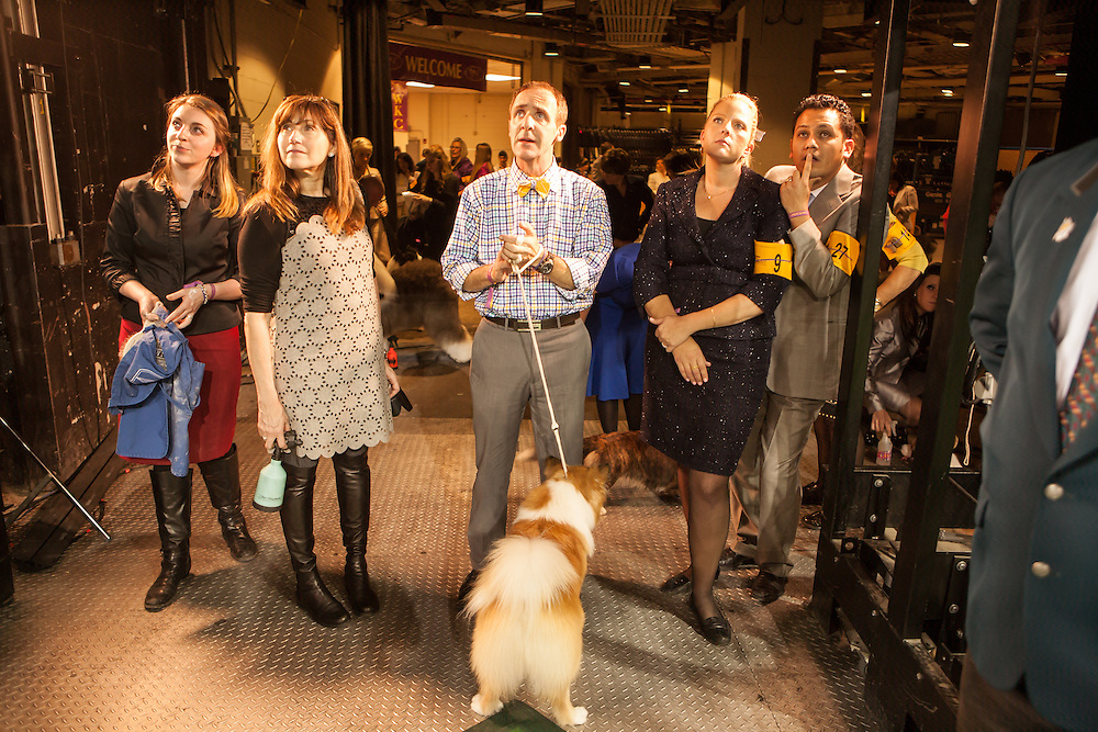 Handlers of dogs in the sporting group watch the previous group's results on monitors as they await their turn in the ring at the 137th annual Westminster Kennel Club Dog Show. The dogs are oblivious.