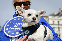 "© Licensed to London News Pictures. 07/10/2018. LONDON, UK. Decorated participants join dog owners, accompanied by their pets, take part in the ""Wooferendum Dog March"", calling for a People's Vote on Brexit, walking from Waterloo Place to Parliament Square.  Photo credit: Stephen Chung/LNP"