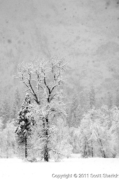 The snow continues to fall in Yosemite National Park.