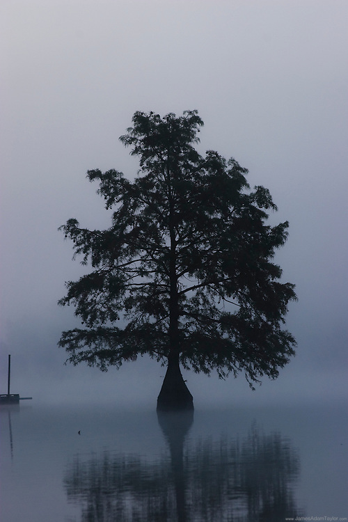 Early morning mist singles out a Bald Cypress growing in Delaware's Trap Pond.