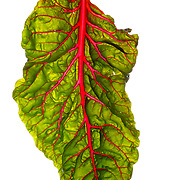 Locally grown Swiss Chard. <br /> Nathan Lambrecht/The Monitor