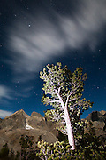 Clouds pass over a tree, lit by headlamp, in the Cirque of the Towers, Popo Agie Wilderness, Wind River Range, Wyoming.