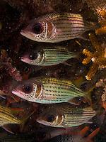 Marine life in Guam's Tumon Bay Preserve