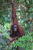 Jungle Wildlife Photography