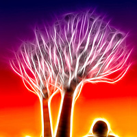 Digital Manipulation of silhouette of a Quiver Tree at Sunset in the Kookerboom Forest, Keetmanshoop, Namibia.