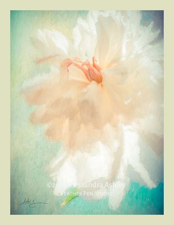 Giant white Festiva Maxima peony, with translucent petals backlit by window light.  Painted effects blended with original photograph. Color border for canvas frame wraparound.