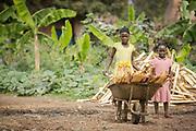 Two girls moving fire wood using wheel barrow, Musoto, Mbale, Uganda