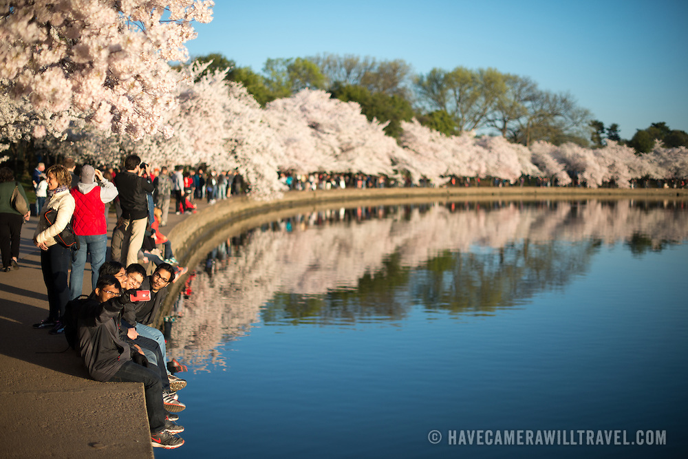 Tourists line the waterfront on a beautiful clear morning with Washington DC's famous cherry blossoms at peak bloom.