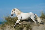THE CAMARGUE: THE WILD WEST OF FRANCE
