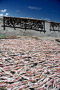 Racks of fish drying in the sun by the side of the road. Ben Da fishing village, Vung Tau, Vietnam