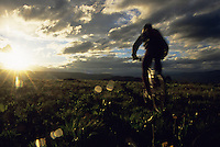 A mountain biker rides through a meadow at sunset in Jackson Hole, Wyoming.