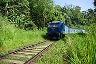A passenger train passes through lush vegetation sortly after departing Ella en route to Kandy, Sri Lanka.