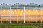 Kassen in Nederlands landschap. |  Greenhouses in the Dutch landscape.