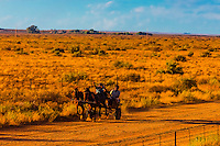 "Passing people in a horse cart as the Rovos Rail train  ""Pride of Africa"" crosses the Great Karoo Desert on it's journey between Pretoria and Cape Town, South Africa."