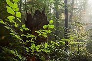 Strandzha Mountain in early autumn