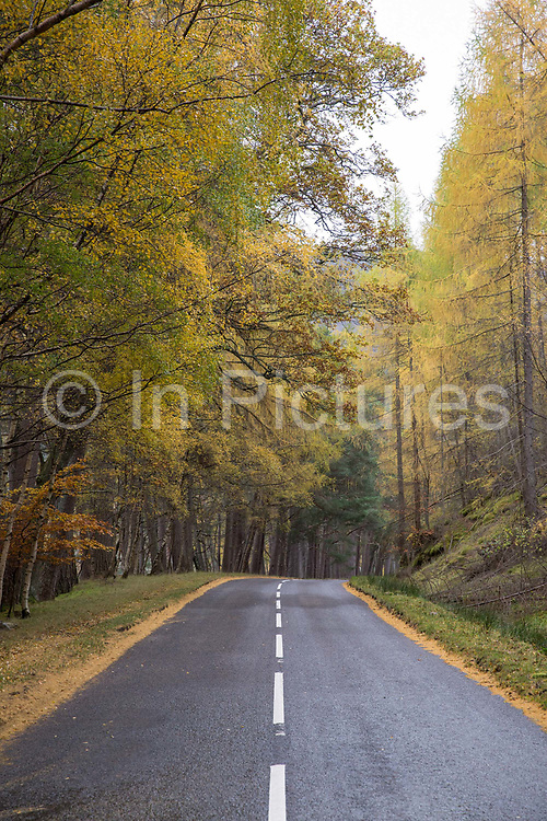 Autumn trees on the 5th November 2018 in Ullapool on the west coast of Scotland in the United Kingdom.