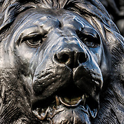One of four large statues of lions that sit at the base of Nelson's Column in Trafalgar Square in central London.